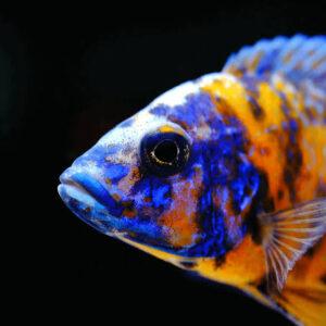 Aquariums & Fishes