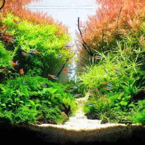 Planted Tanks